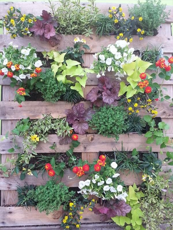 Vertical pallet garden outside ideas pinterest for Vertical pallet garden