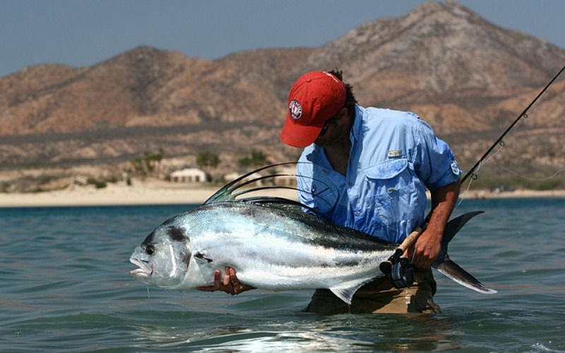 Punta colorada is known as the roosterfish capital of the for Rooster fish cabo