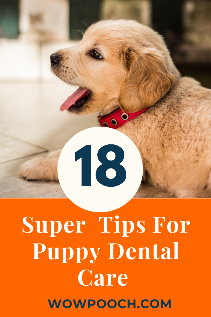 18 [Super Awesome] Tips & Tricks For Puppy Dental Care - WowPooch