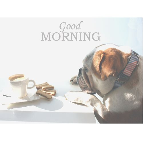 Good Morning! Apple's Coffe time with your collar Striped ☀