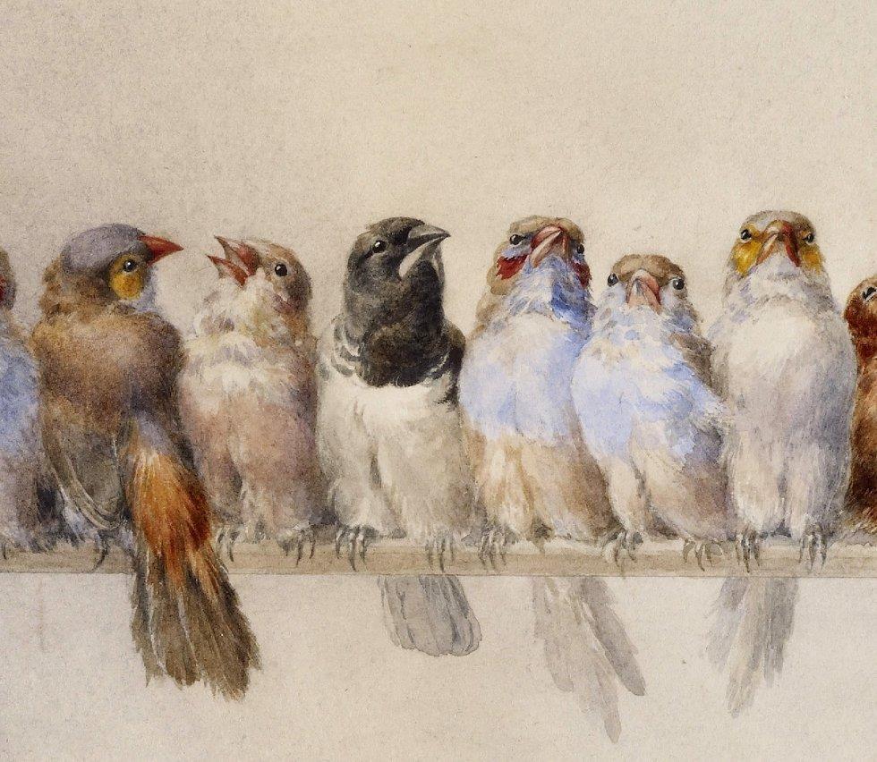 """Résultat de recherche d'images pour """"Hector Giacomelli 1880"""""""