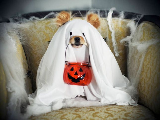 81 Of The Best Dog Halloween Costume Ideas For Your Pooch Dog
