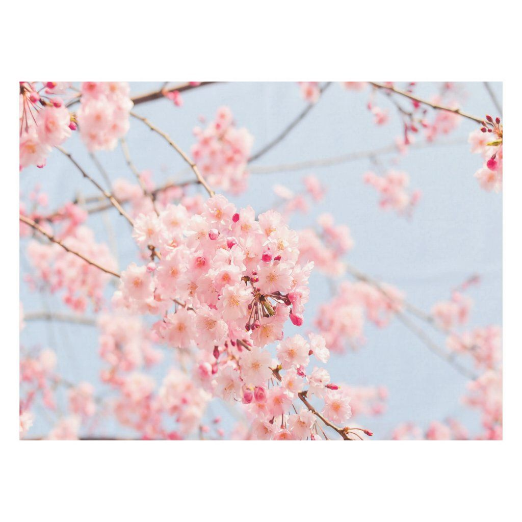 Cherry Blossom Blue rose Lighthouse Route Decor Tablecloth
