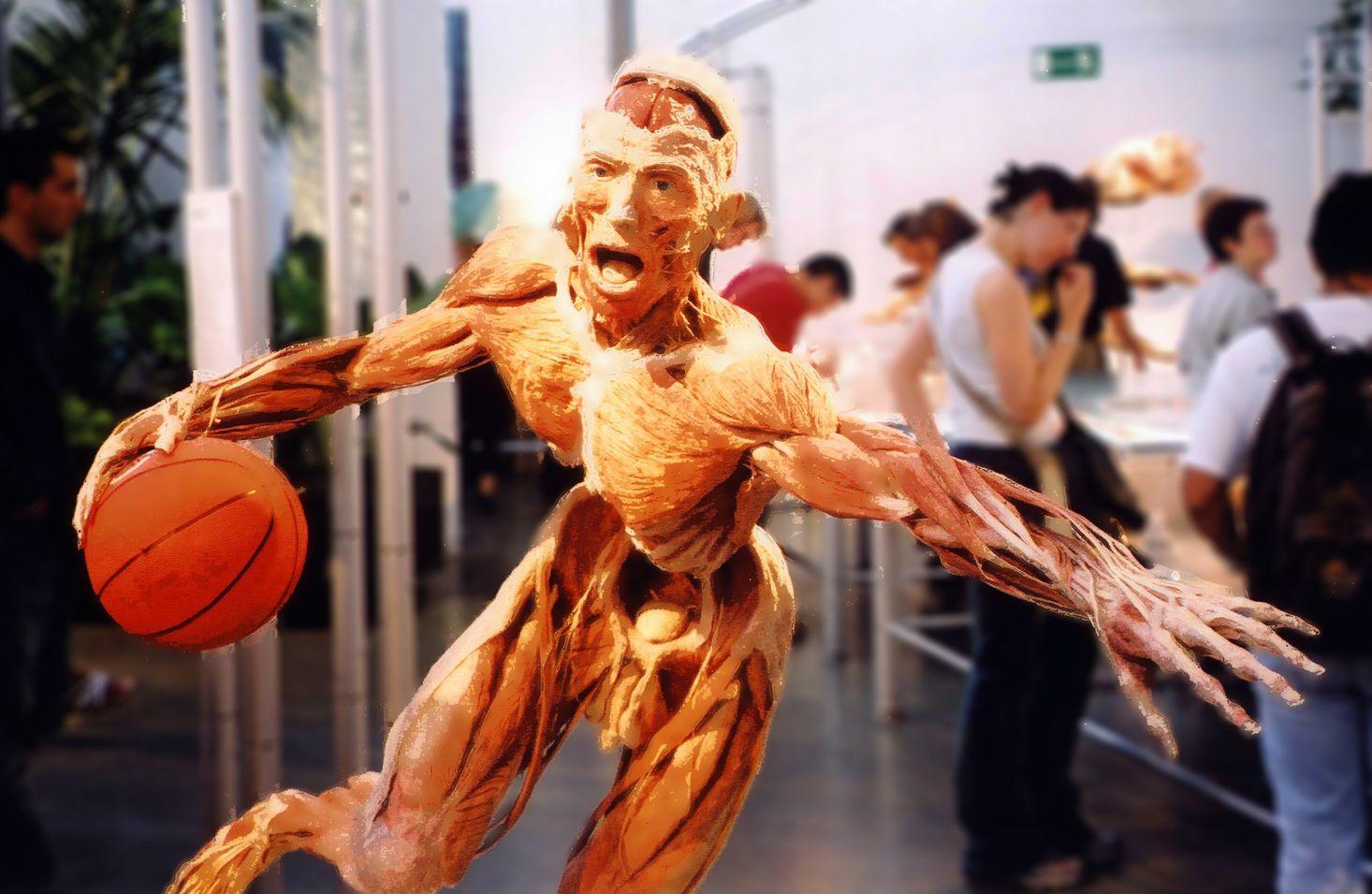 body works exhibit denver - Hong.hankk.co