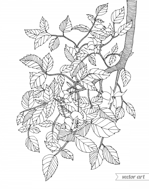 This Branch Coloring Page Features A Picture Of Tree To Color The Is Printable And Can Be Used Anywhere