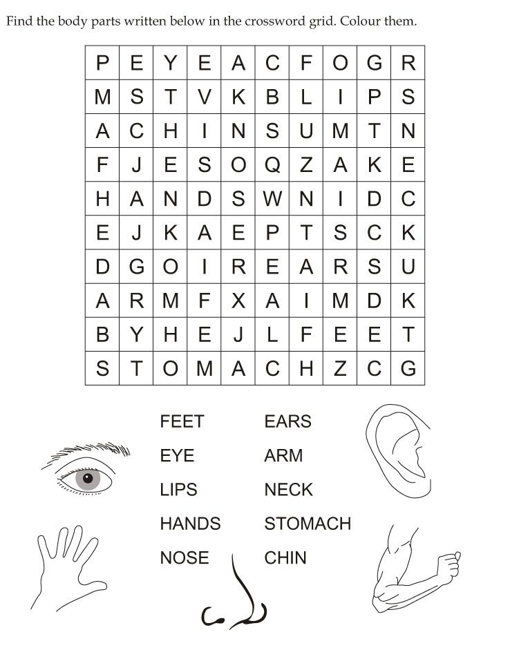 Find The Body Parts Written Below In The Crossword Grid  Word