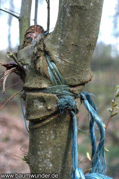 Baumwunder Land- und Forstwirtschaft