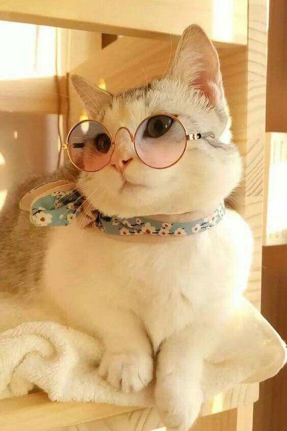 Kitty cats pets cute #kittycats