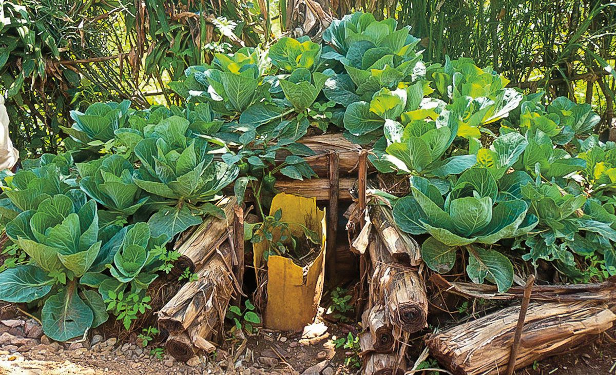 Der Keyhole Garden Oder Selbstversorger Garten Ist Ein Beet Mit Integriertem Kompostbehalter Ein Einfaches Diy P Selbstversorger Garten Garten Hochbeet Garten