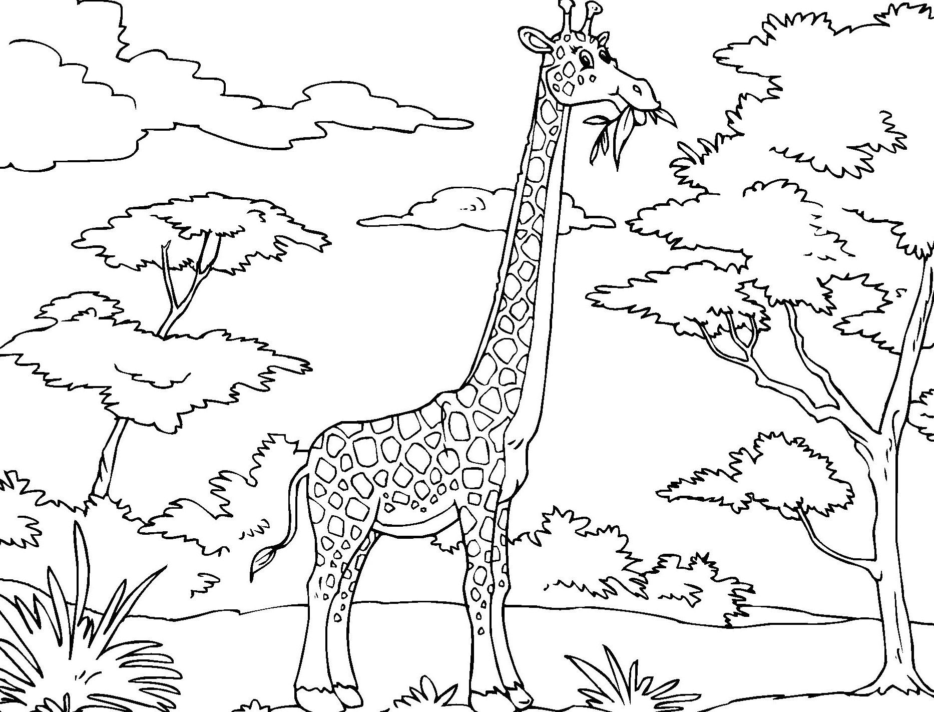 printable giraffe coloring pages animal coloring