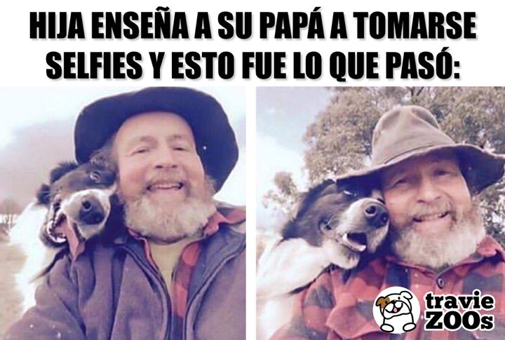 Ha Creado Un Monstruo De Amorosas Y Tiernas Selfies Mascotas Perro San Bernardo Perros