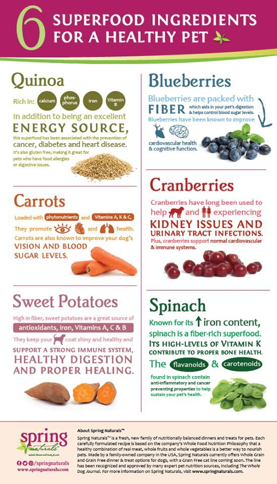 Food Infographic The Healthy Choice For Pets Global Pet Foods Healthy Dog Food Recipes Make Dog Food Raw Dog Food Recipes