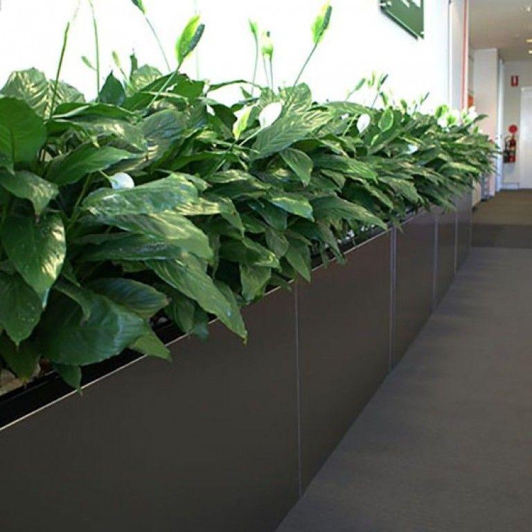 Troughs Eco Green Office Plants Indoor Office Plants 400 x 300