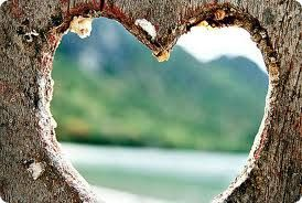 Heart In A Tree Heart In Nature Nature Heart Shapes