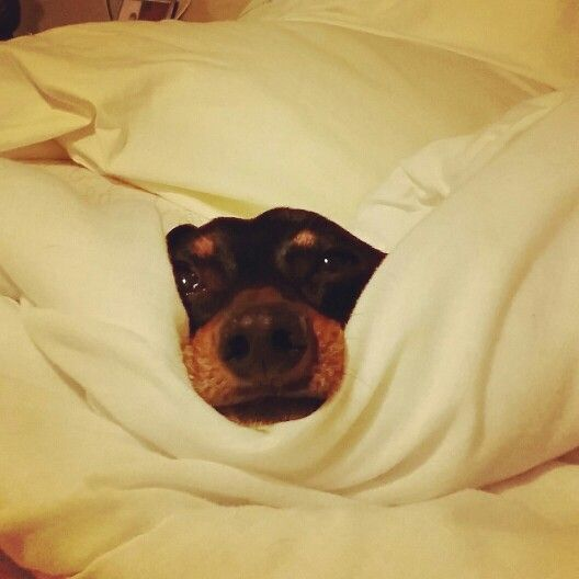 Come Snuggle with me