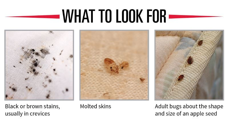 How To Check For Bed Bugs In A Hotel Room Or Other Public Places Bed Bugs Signs Of Bed Bugs Bed Bugs Infestation
