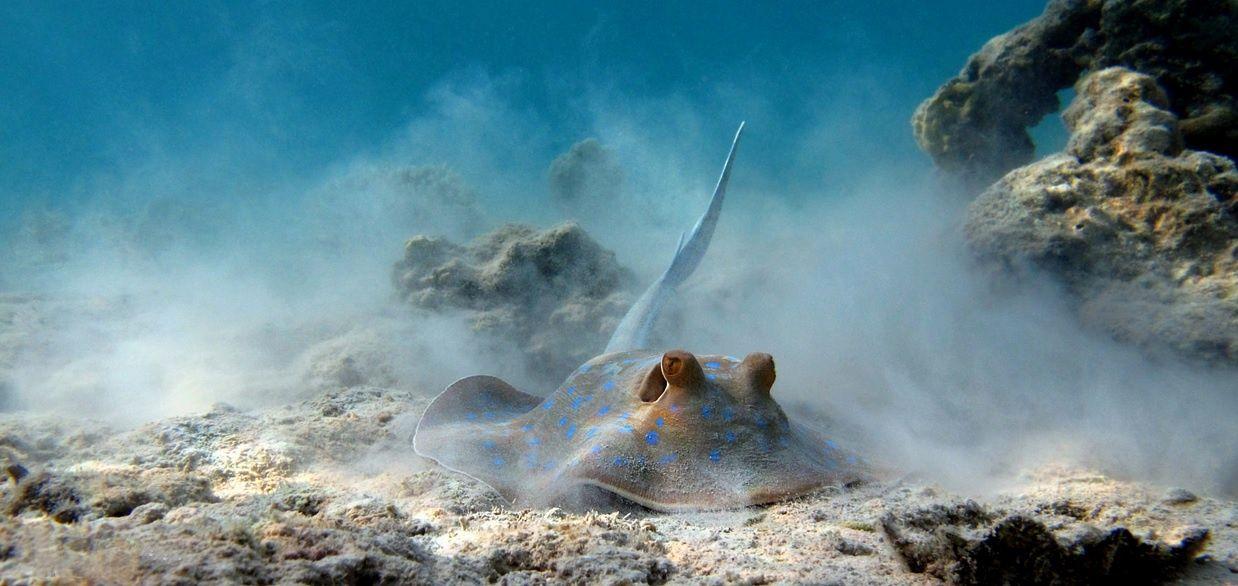 Arrecifes de Coral y Peces Colores,http://www.ibisegypttours.com/es/viajes-a-egipto/viajes-mar-rojo/viajes-hurgada-el-cairo