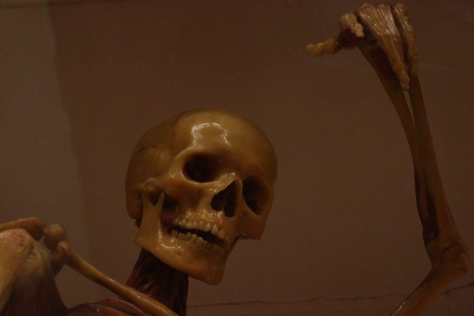 """Museo di Storia Naturale """"La Specola"""" ©Joana Berrones"""