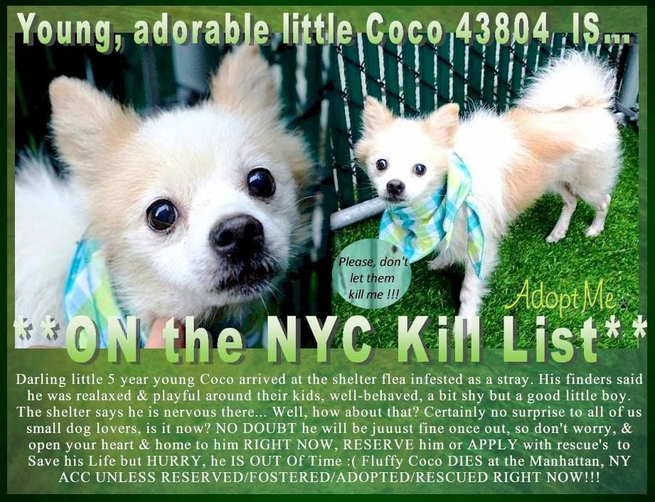Image May Contain Text Nyc Dogs Pet Adoption Animals