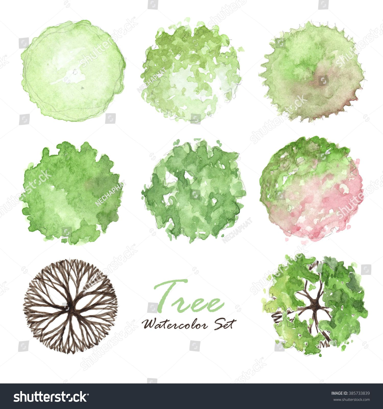Related Image Trees Top View Watercolor Trees Oak Tree Drawings