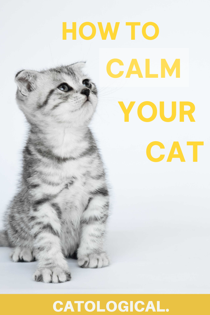 How To Calm Down Your Cat When It S Angry Scared Or Agitated In 2020 Cat Facts Cat Care Cat Mom