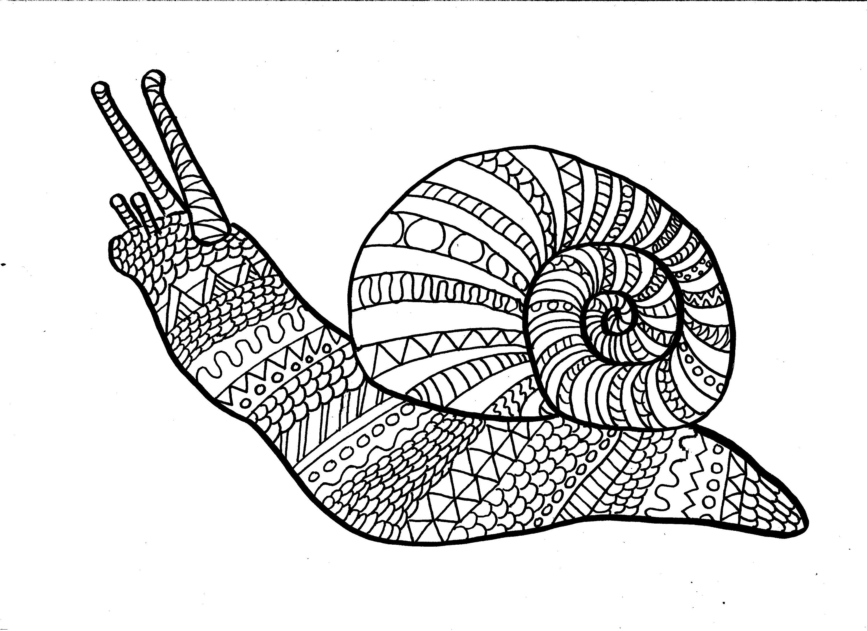 Snail colouring page, adult colouring page, digital