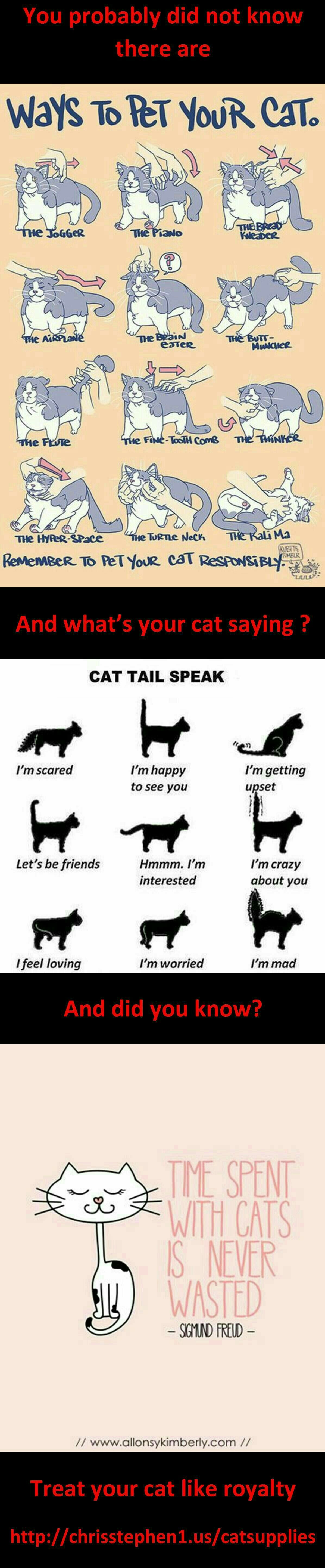 Thats Right You Are Mine Cat Crazy Cats