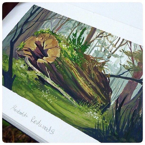 "J.A.W. Cooper on Instagram: ""Detail of that plein air gouache painting from the Humboldt Redwoods. #JAWCooper #humboldtredwoods #gouache #pleinair #moleskine…"""