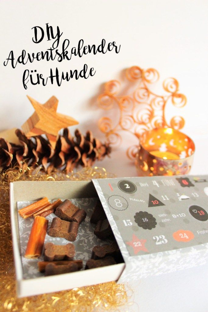 Weihnachtskalender Für Hunde.Diy Adventskalender Fuer Hunde Weihnachten Selbermachen Geschenk