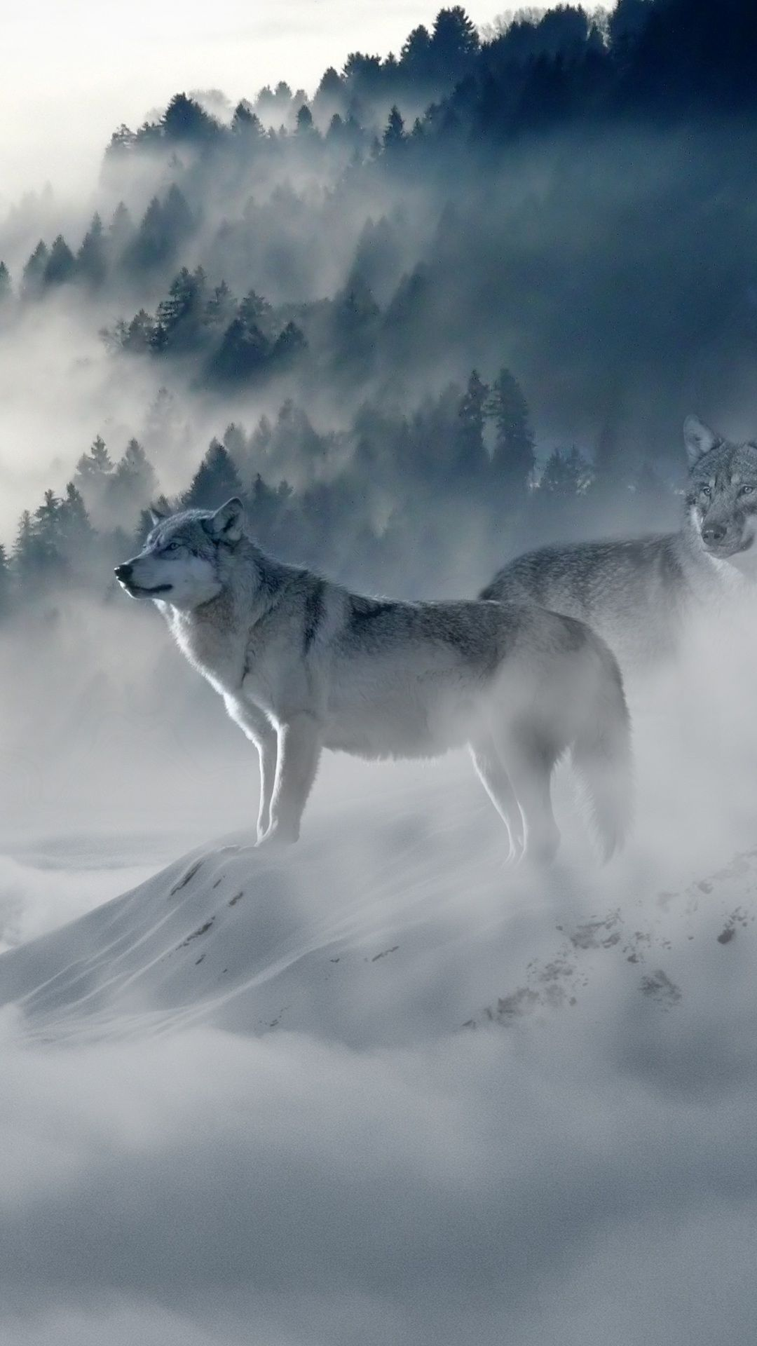 Snow Wolf In 1080x1920 Resolution Snow Wolf Wolf Wallpaper Wolf Pictures