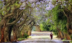 More trees on your street means fewer health problems, says study.  Don't have them? Plant them!