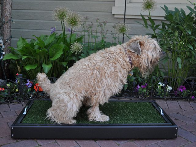 Marvelous Train Your Dog To Use Pet Patio Potty™