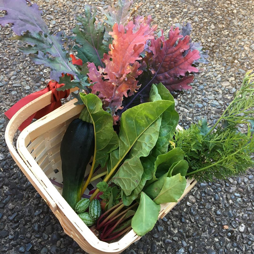 Another little harvest from my garden boxes Kale chard beets carrots zucchini and mouse melons Then some bonus pictures of my chickpea plant my marigolds mouse melon vine...