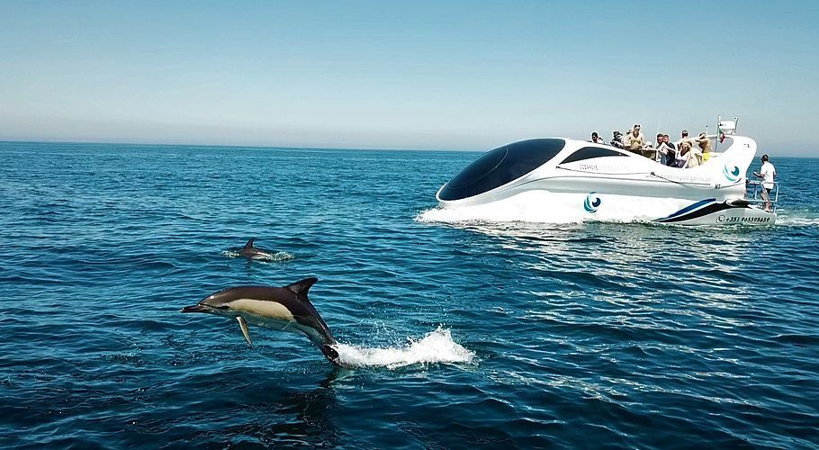 Dolphin And Benagil Tour From Albufeira In 2020 Boat Tours Dolphins Tours
