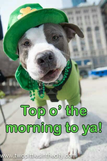 St Patrick S Day Pet Style Pooch Cool Pets