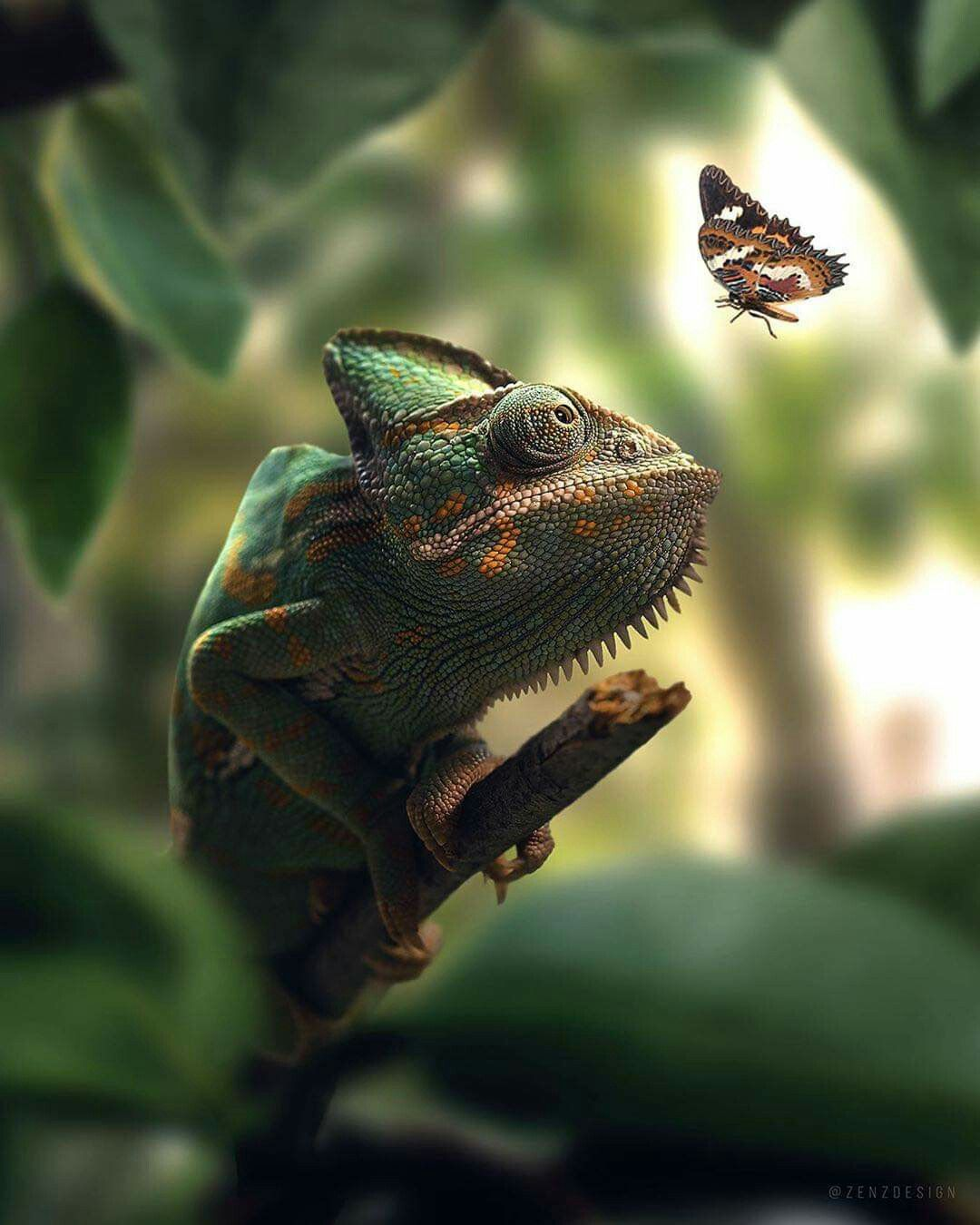 Pin by ♥ Rebecca Phillips ♥ on Reptiles and Insects