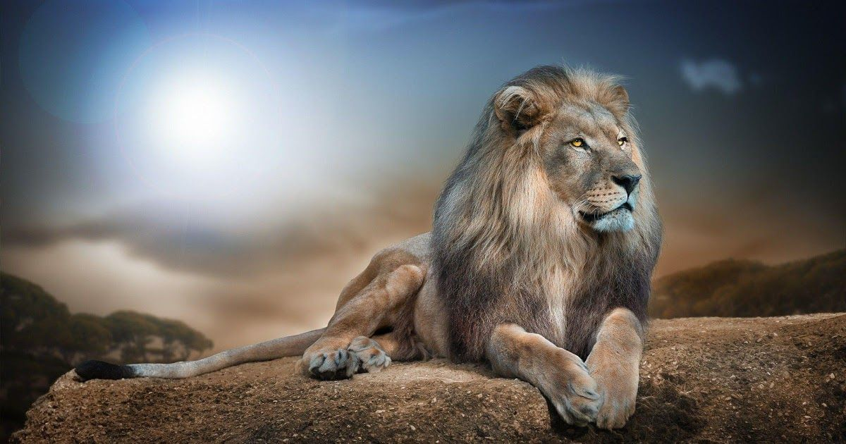 11 Wallpaper Animal Hd In 2020 Wild Animal Wallpaper Animal Wallpaper Lion Wallpaper