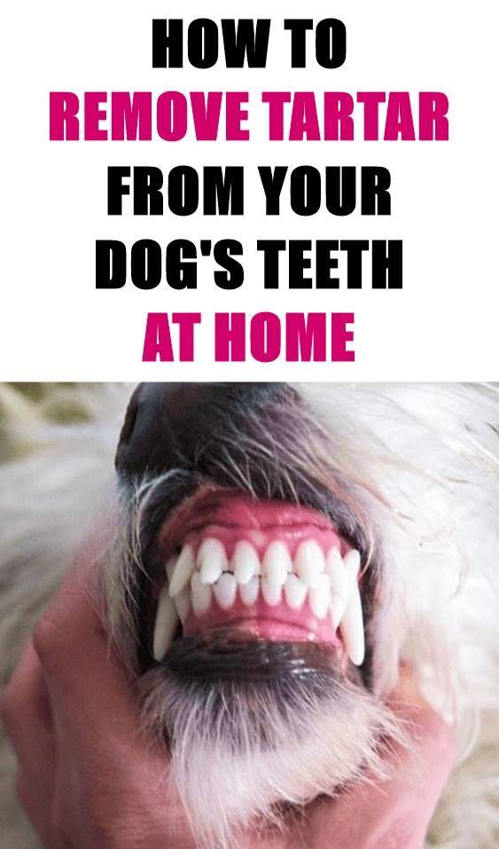 Pin by Crystal Hyde on Doggie Info Dog teeth