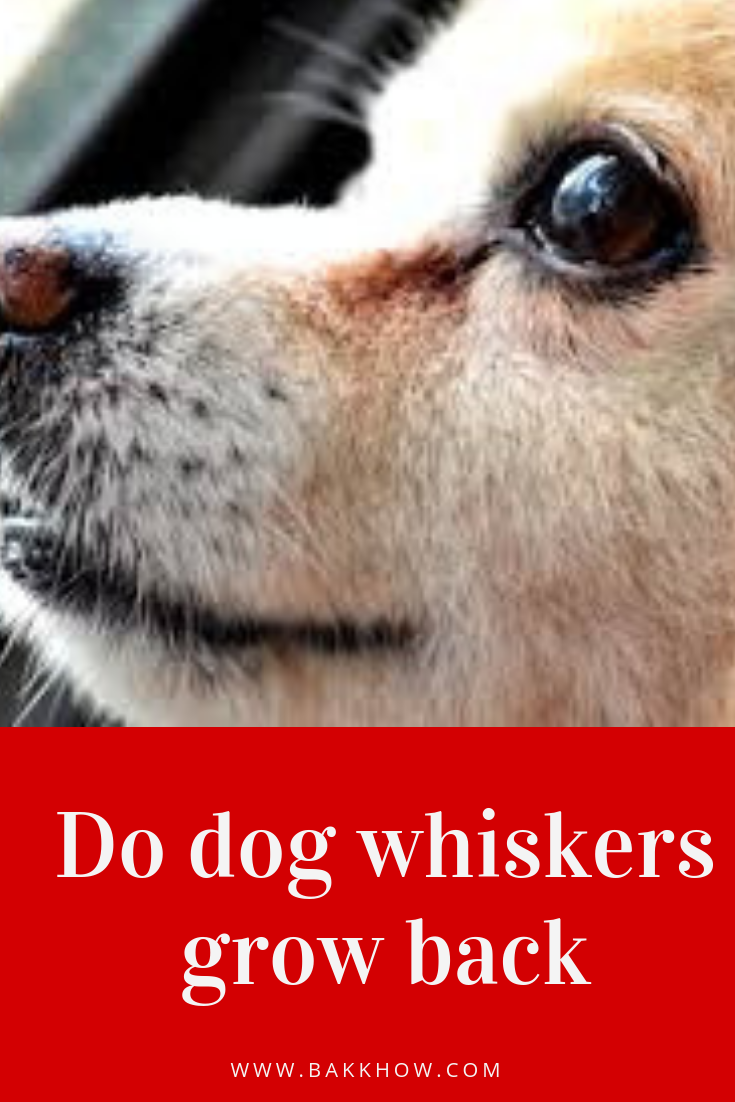 Do dogs whiskers grow back Dog whiskers, Dogs, Whiskers