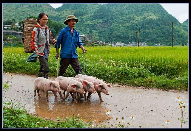 Sau Phiên Chợ by Luynguyen-nghiepdu, via Flickr