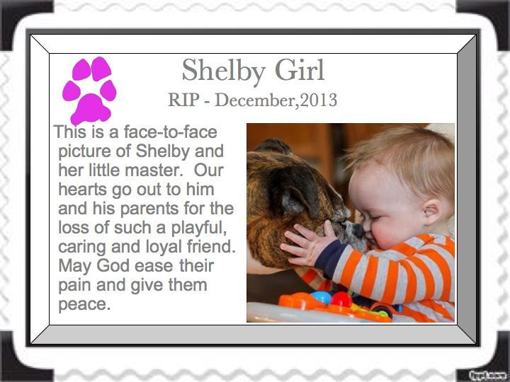 To the memory of Shelby Girl: A face-to-face picture of Shelby and her little master.  Our hearts go out to him, his baby brother,  and his parents for the loss of such a playful caring and loyal friend.  May God ease their pain and give them peace.