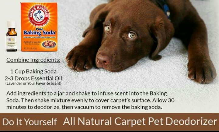 Diy Carpet Cleaner For Machine Pet Urine Stains