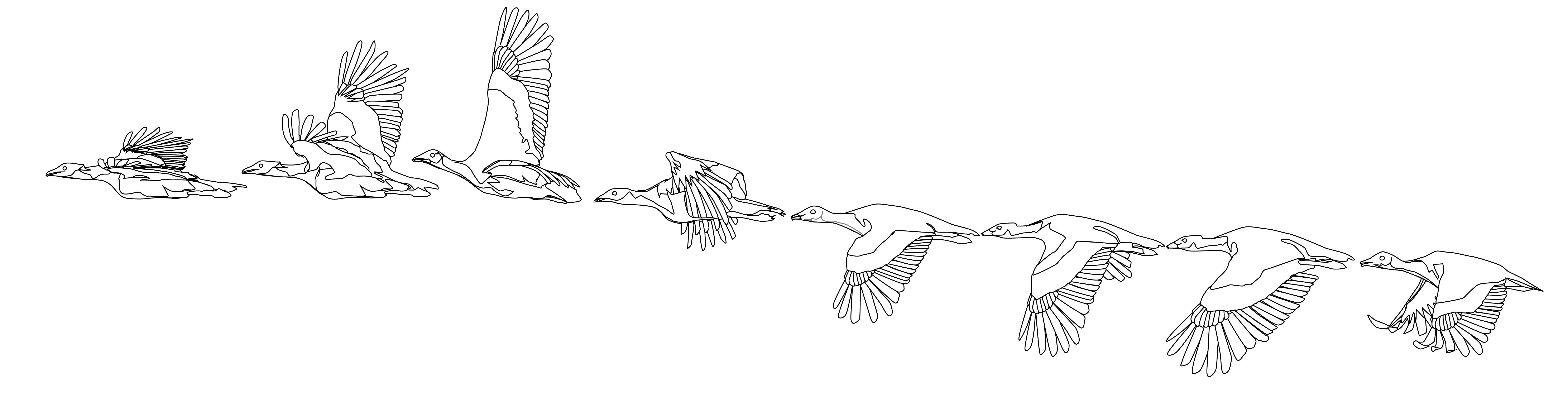 Полет птиц анимационные картинки