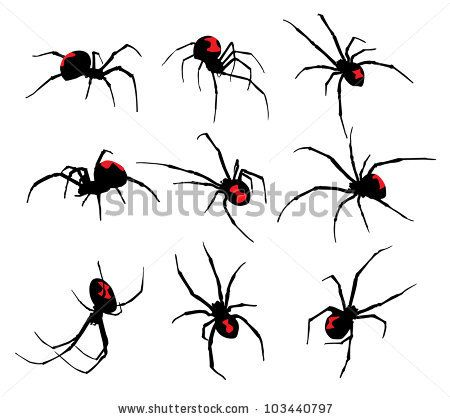 Black Widow Spider Set By Webspark Via ShutterStock In A Variety Of Poses