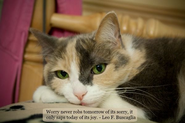 Sunday Purrs Of Wisdom Don T Worry Be Happy Cats Fluffy