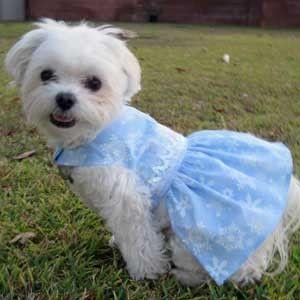 Omg Cuteness Overload Artfire Formal Christmas Dog Dresses Blue
