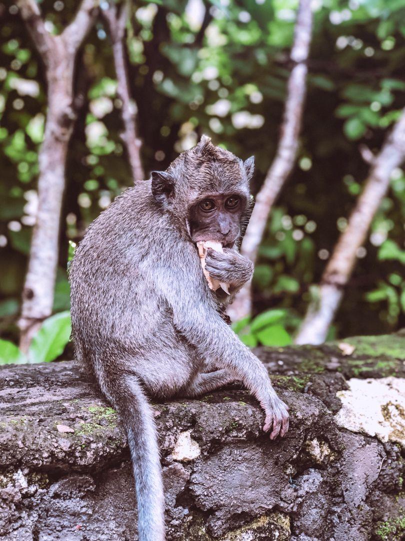 Oh, monkey days! Found this cutie at the Uluwatu temple in Bali. #animals #travel #traveldestinations #travelideas