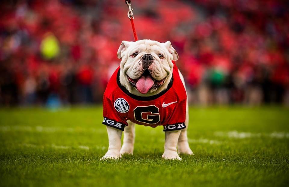 Uga X Que Georgia Bulldog Mascot Uga Georgia Georgia Bulldogs