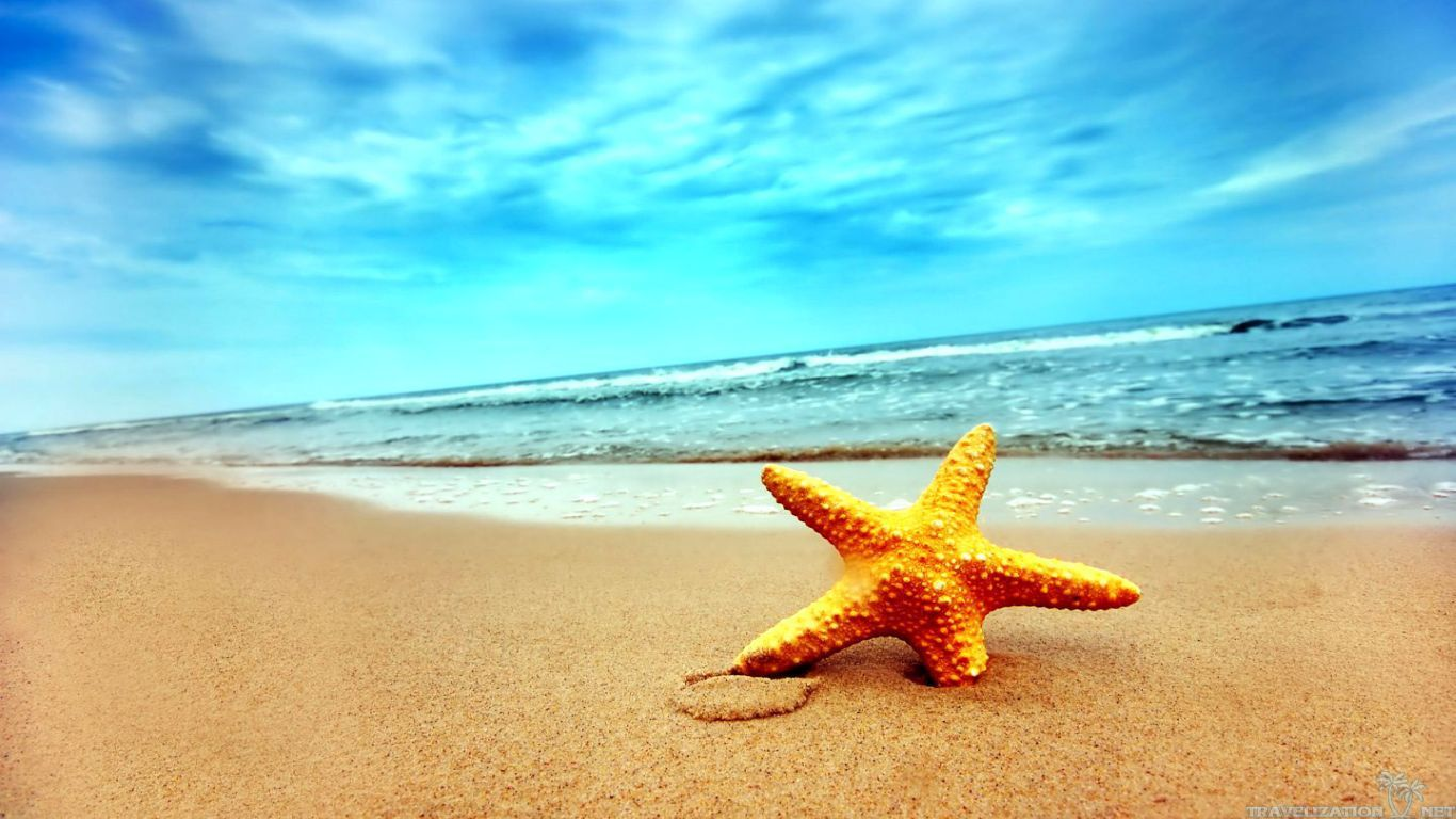 Summer Beach Scenes Beach Summer Sea Star Scenes