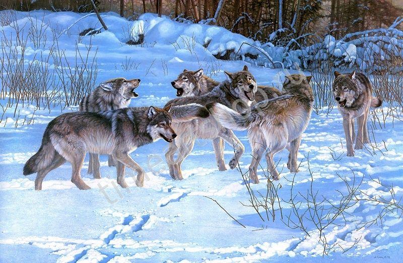 Волчья стая зимой, картины раскраски по номерам, размер 40 ...